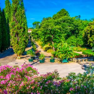 The plant garden
